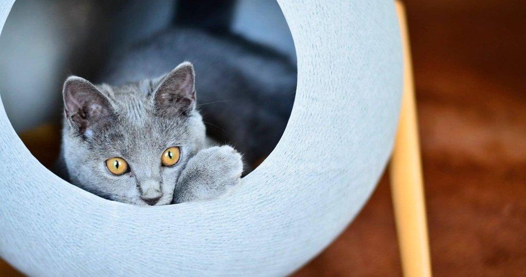 meyou mobilier et accessoires pour chats jamais sans maurice. Black Bedroom Furniture Sets. Home Design Ideas