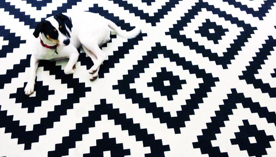 hotel-chien-accept-petfriendly