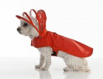 chien-combinaison-pluie-2