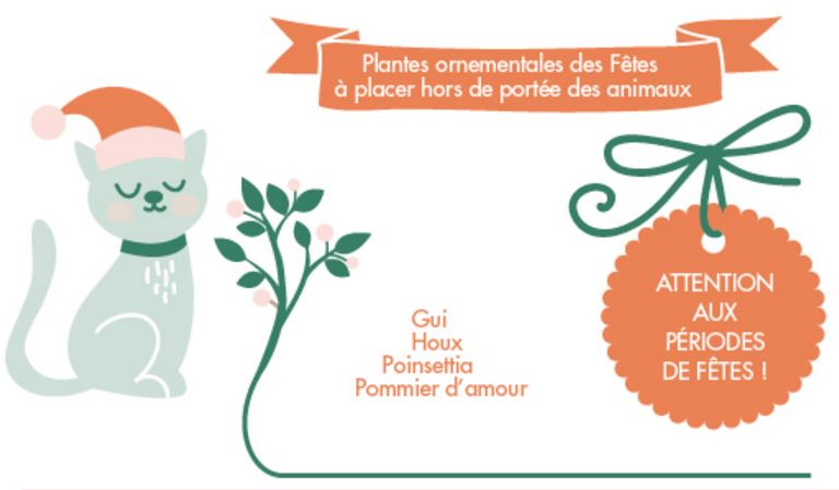 noel-animaux-chat-chien