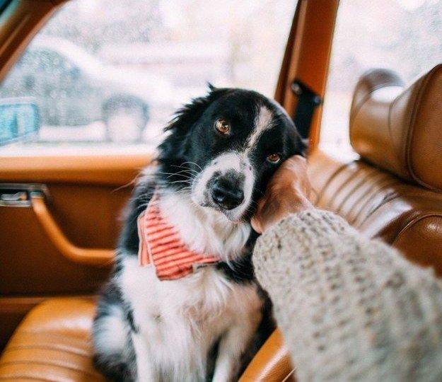 partir-vacances-chien
