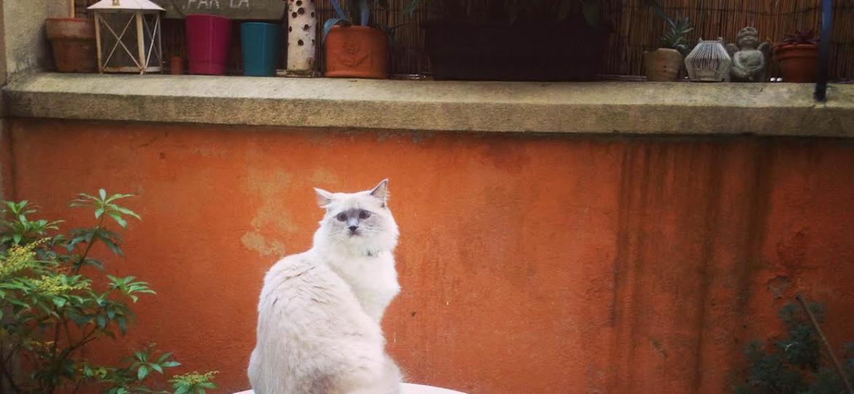 parc-chats-milan-italia