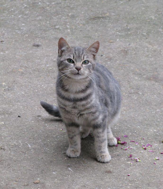 Notre mission : soigner et aider les autres à soigner leur chat et surtout leur éviter l'euthanasie.