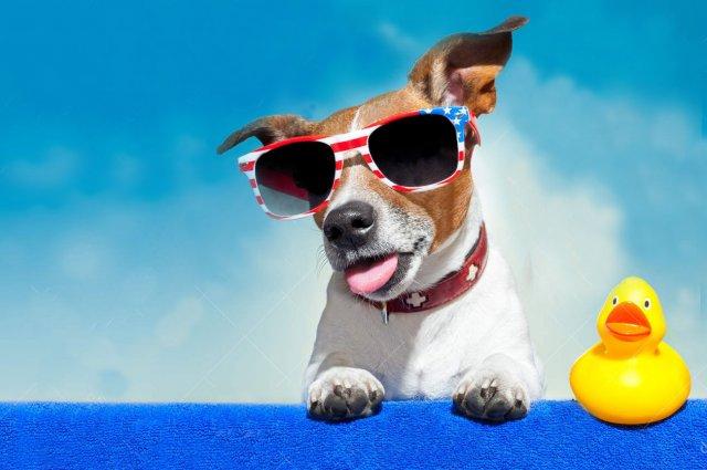 vacances-avec-chien