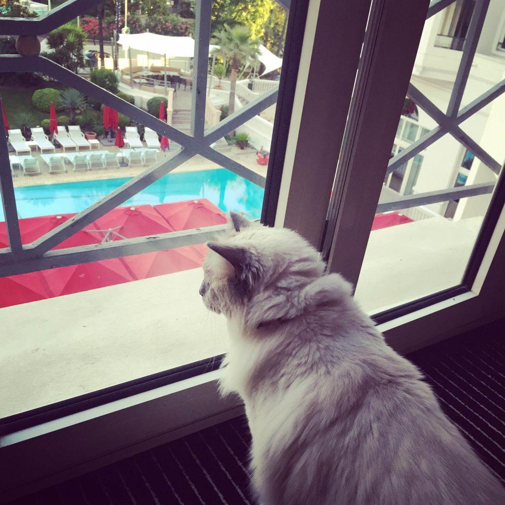 Mauricette sur la croisette h tel majestic cannes for Hotels qui acceptent les chiens