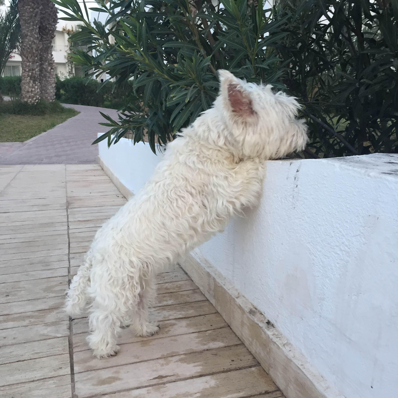 hotel-djerba-chien-petfriendly-2