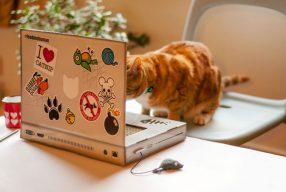 Tentez de gagner un griffoir ordinateur pour chat