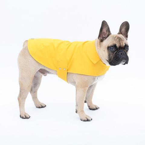 manteau-pour-chien-bouledogue-2