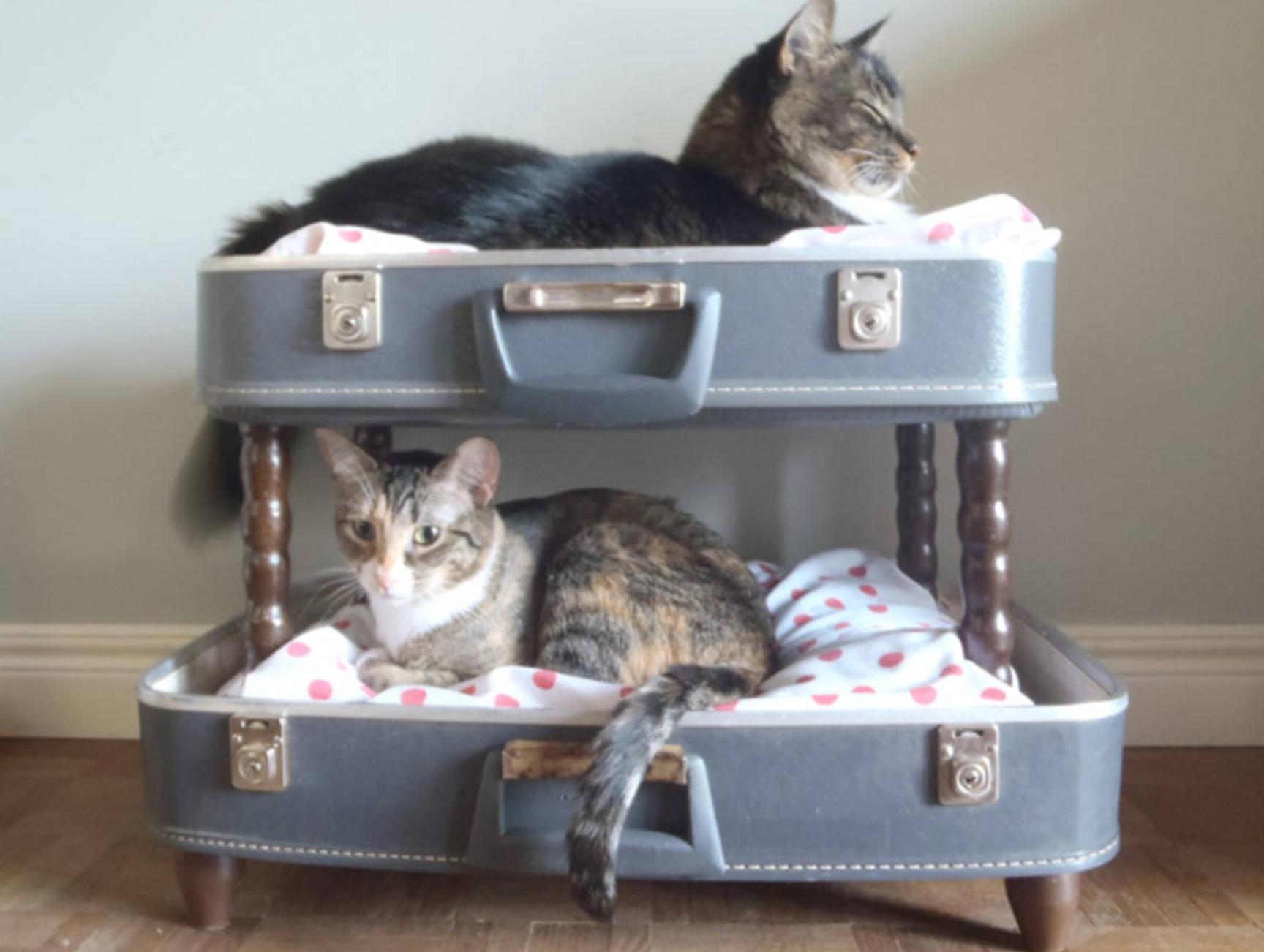 panier pour chat 10 id es de cadeaux insolites pour votre minet. Black Bedroom Furniture Sets. Home Design Ideas