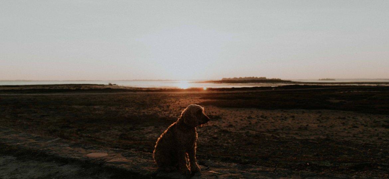 partir-en-bretagne-avec-son-chien