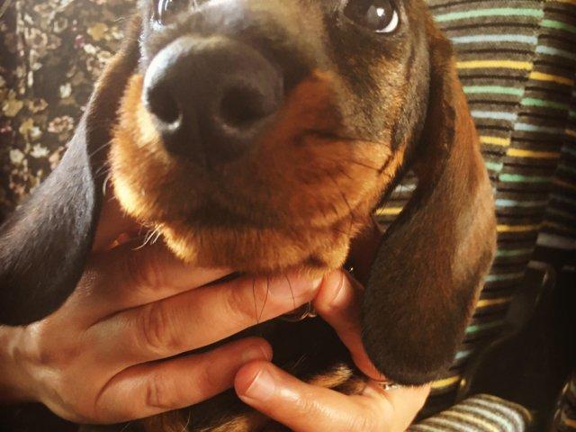 assurance voyage chien animal