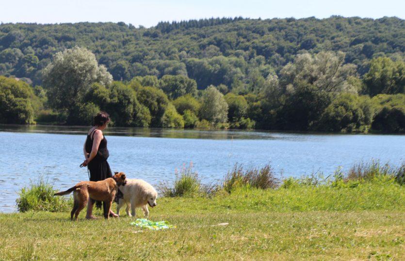 Un week-end en Normandie avec son chien à Pont-Audemer