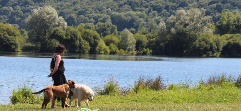 week-end pet friendly pour partir avec son chien en Normandie à Pont Audemer et au Petit Coq aux Champs comme hôtel qui accepte les chiens et les animaux