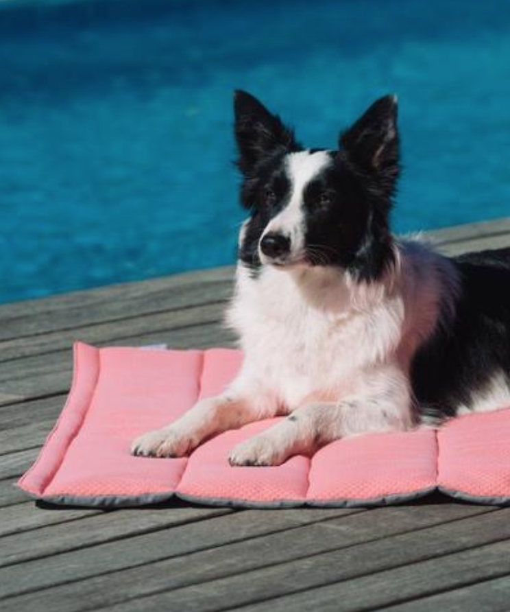 préparer les vacances de son chien ou chat animal hariet et rosie trousse secours pet friendlypréparer les vacances de son chien ou chat animal hariet et rosie trousse secours pet friendly