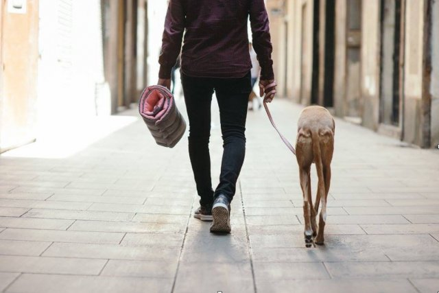 préparer les vacances de son chien ou chat animal hariet et rosie trousse secours pet friendly