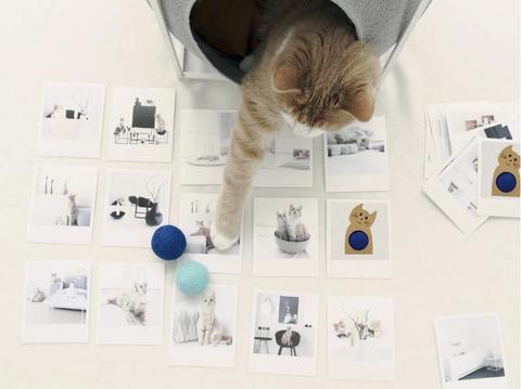 griffoir jeu chat jouet