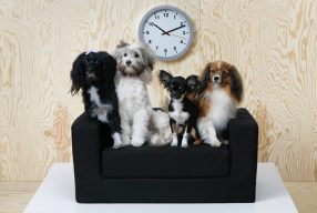 IKEA lance son animalerie et sa collection pour animaux