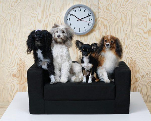accessoires pour chien lyon. Black Bedroom Furniture Sets. Home Design Ideas