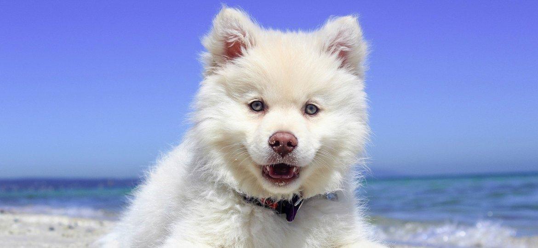 Espagne avec son chien partir en catalogne et sur la for Hotels qui acceptent les chiens