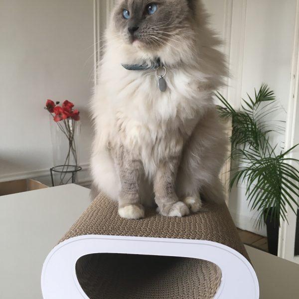 griffoir pour chats grattoir