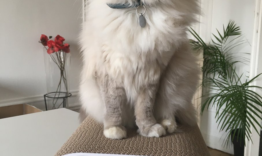 griffoir pour chats grattoir jamais sans maurice mauricette