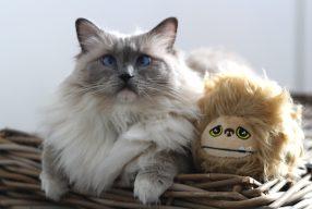 Concours : 4 coffrets Furminator pour chien ou chat à gagner