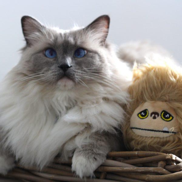 furminator brosse pour chat et chien
