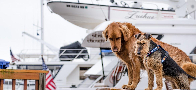 voyage en bateau avec son chien