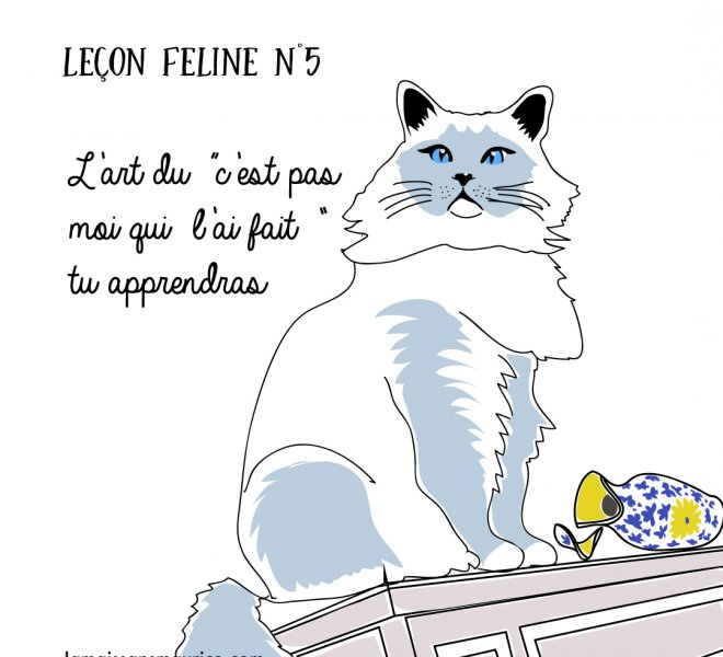 lecon féline 3 jamais sans maurice illustration chat