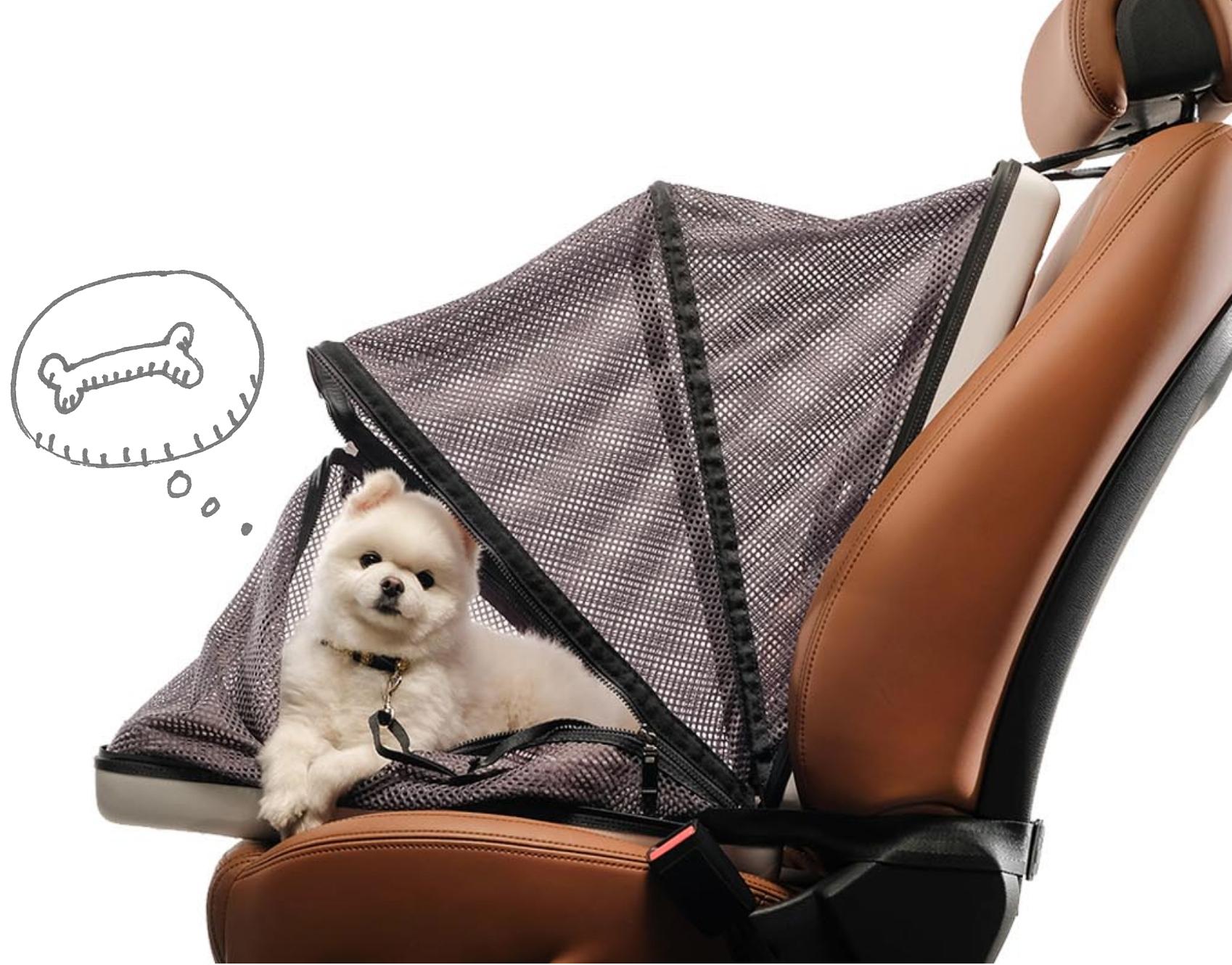 voyage en voiture avec son chien en toute sécurité