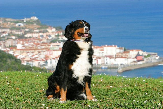 partir en vacances en Espagne avec un chien