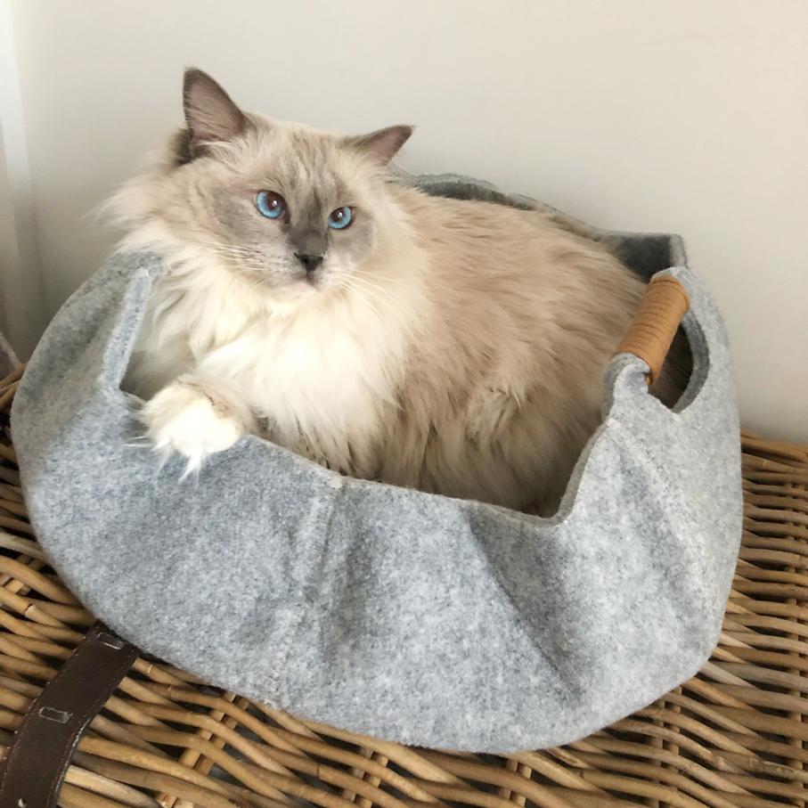 chat et bébé comment préparer naissance