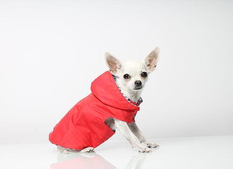 manteau pour chihuahua fridavestida
