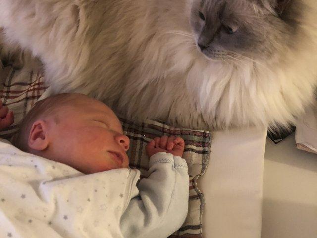 bébé avec un chat
